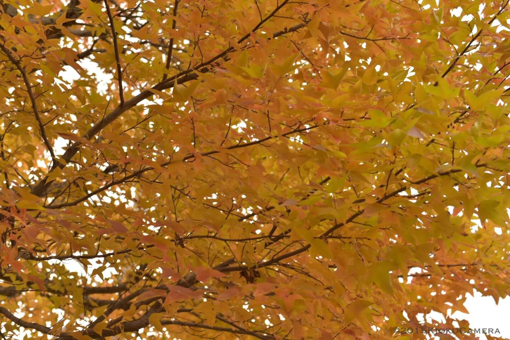 ここからストンと秋冬色になる、と思う。