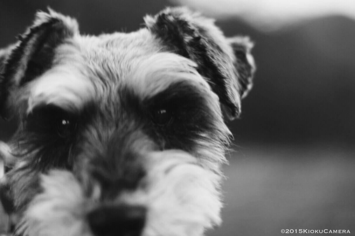 想像してたより悲しくないのは、彼との日々がとても素晴らしいものだった証だと思う。Merry Xmas My Dog:)