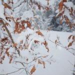 雪、無音、GR。