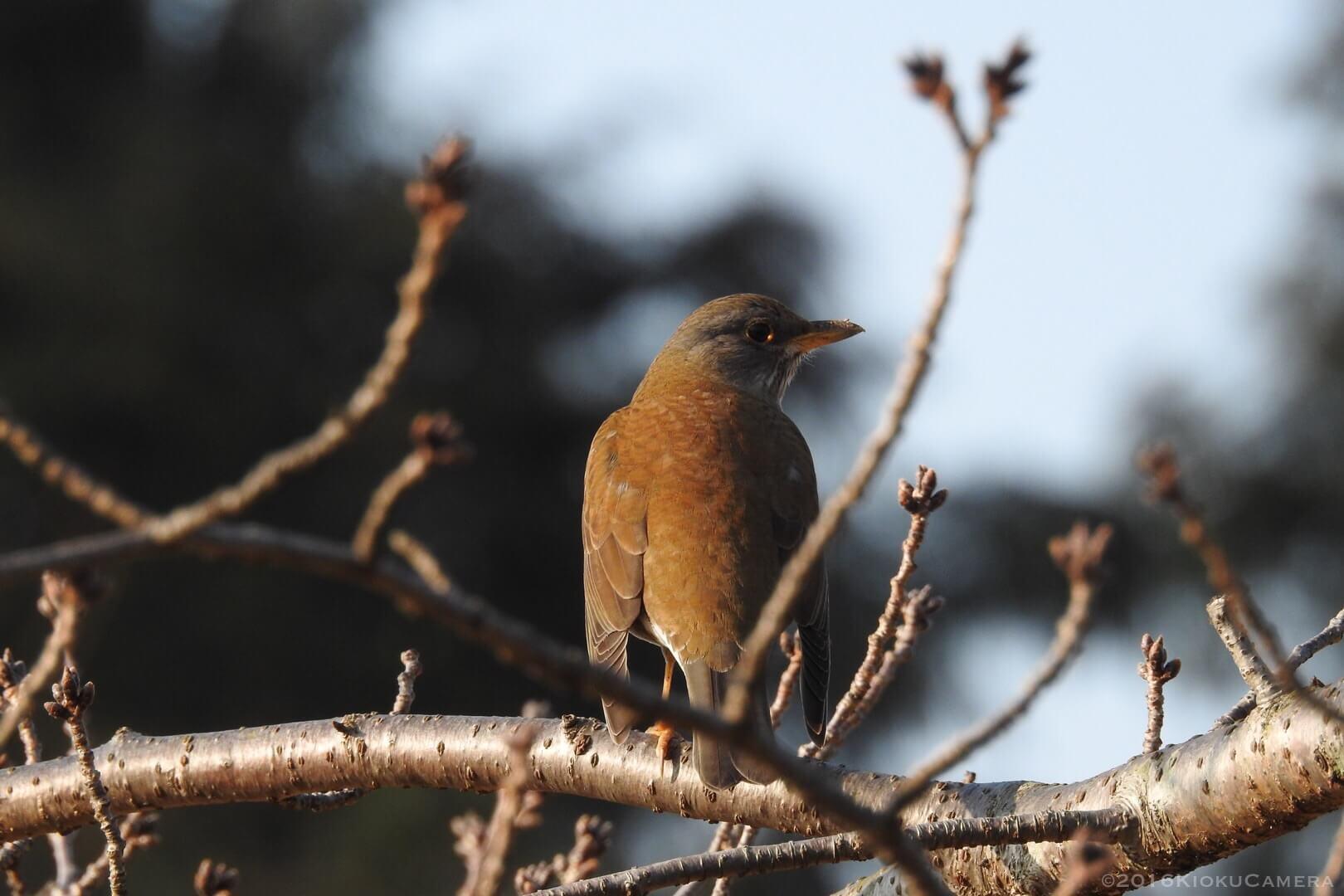 何て言う鳥だろう。週末の朝、P900と散歩カメラ。