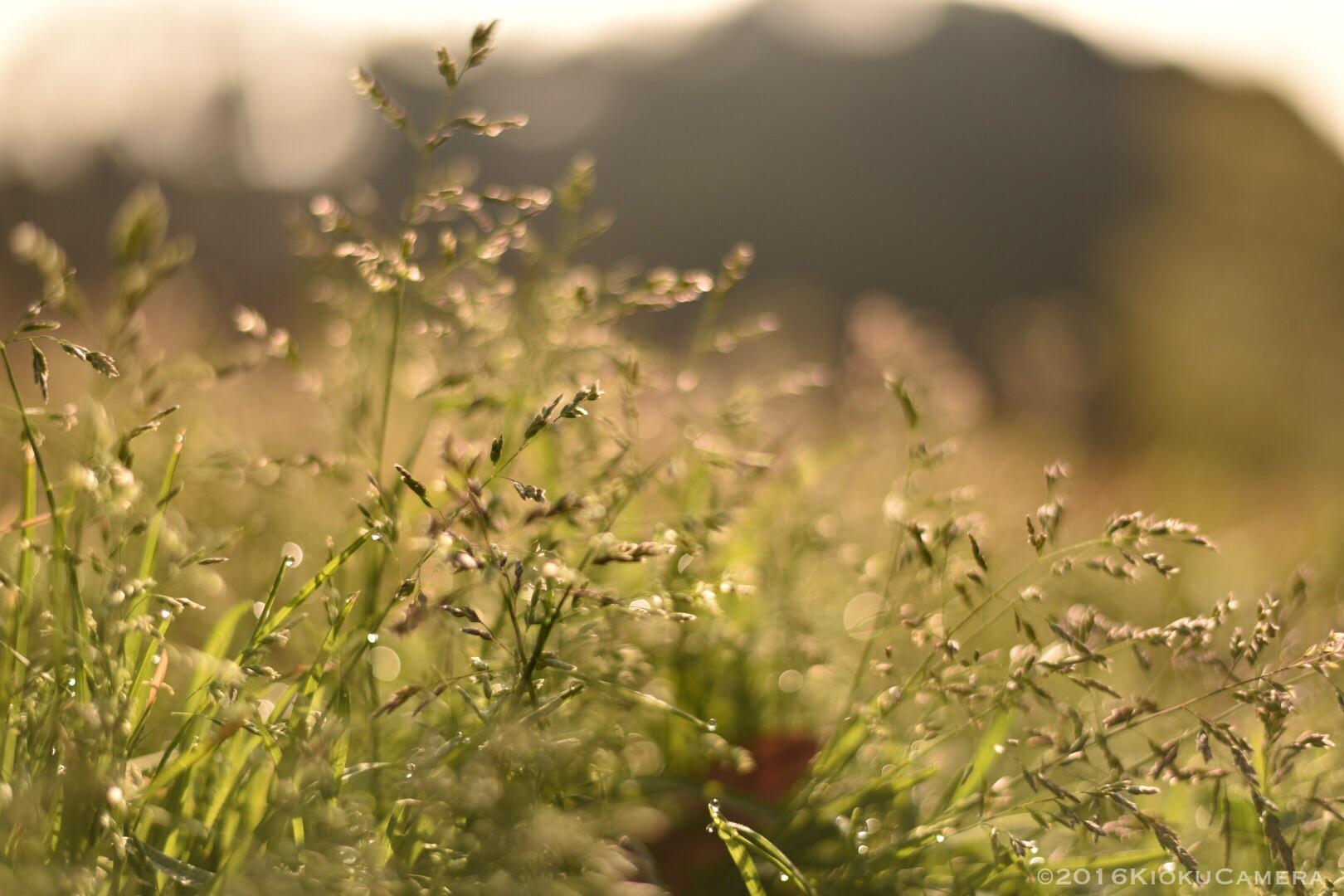 できれば風の音を撮りたい、みたいなのはある。