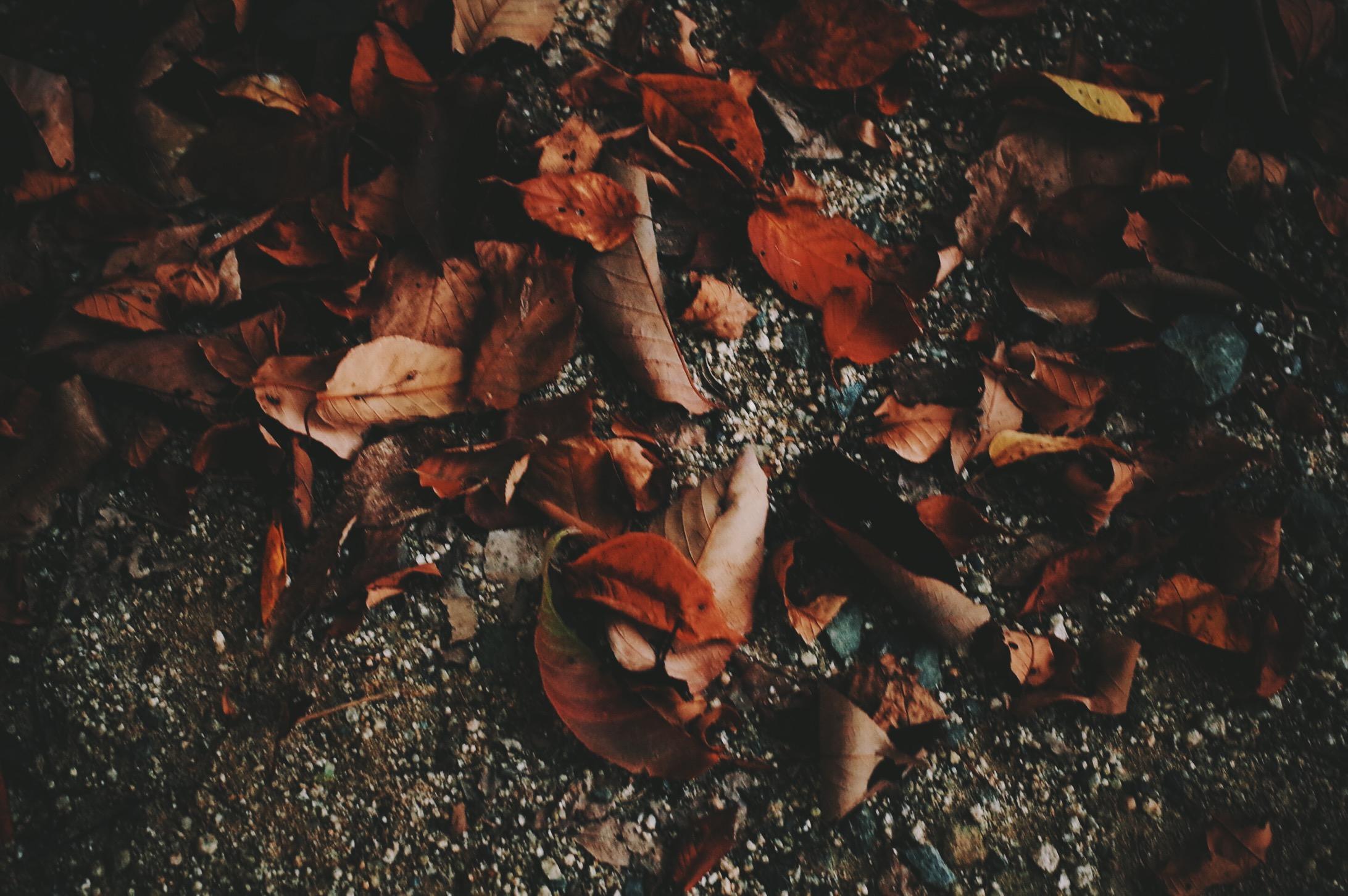 夏から秋が、いちばんせつないよな。なぜだろうね。