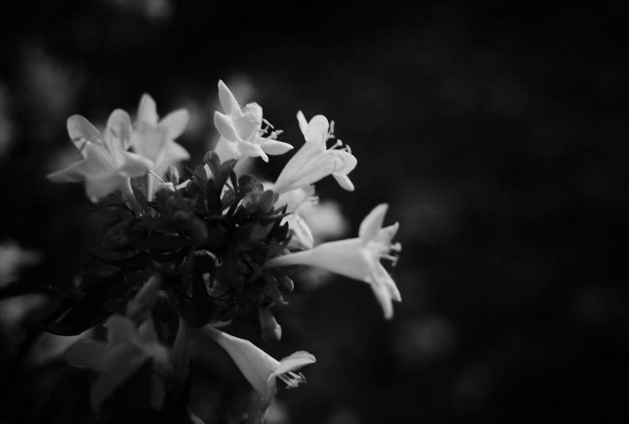 カメラを持つと、花との距離が近くなる。
