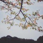 ヘッドフォン×RICOH GRでゆるり秋散歩の日曜日。