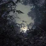 週末はフィルムカメラと森の中へ。