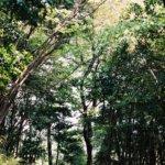 写真でふりかえる森が好き。