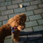 愛犬が、僕とカメラを外に連れ出してくれる。