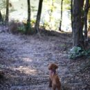 週末の朝は、愛犬と一眼レフと森へ。