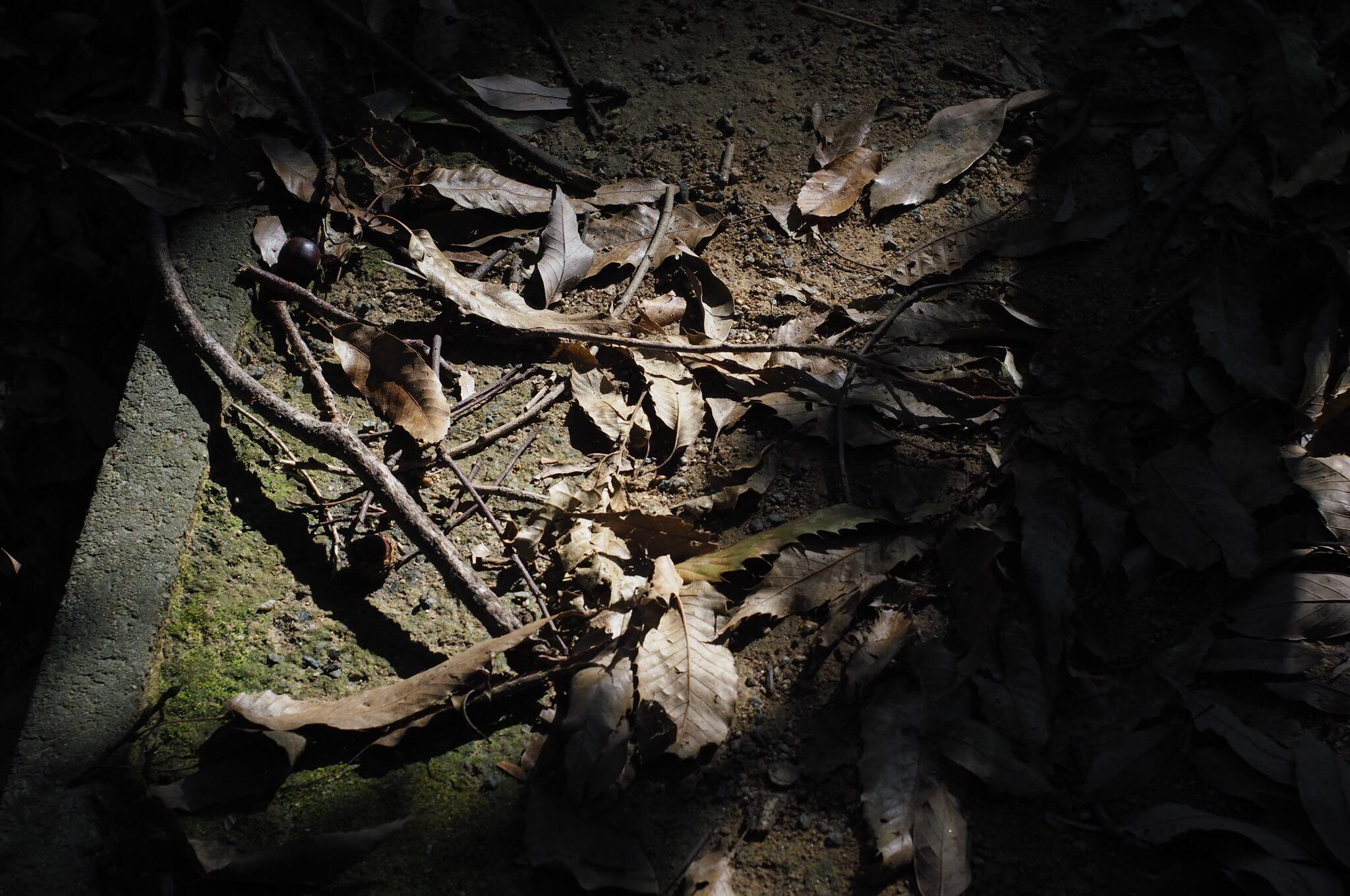 ミラーレスPEN-FにElmar M 50/3.5をつけて、秋の小道を撮り歩いてみた。