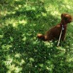 平日のオフ、午後もデジタルで散歩カメラ。僕と愛犬とLeica M-P typ240。