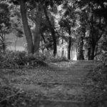 モノクロ気分な日曜日。Leica M-P typ240 × Summilux 50/1.4 2nd