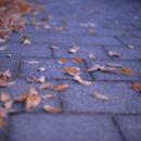 秋の終わりの散歩カメラ。Nikon Df × 50/1.4D〈20枚〉